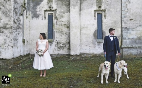 creative wedding day portrait session with a Dublin bride and groom with two white dogs
