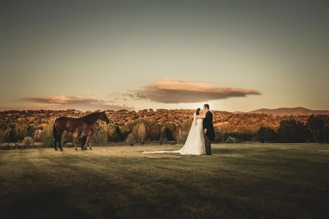 Pferde-Paar-Braut-Bräutigam