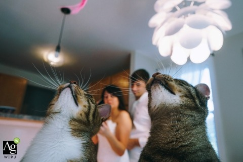 Bronx creative wedding photography | detail of cats looking up