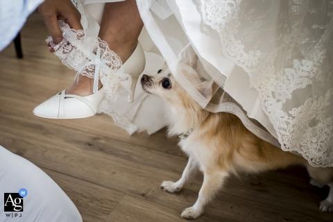 Utrecht-künstlerisches Hochzeitsfotodetail der Braut Strumpfband, Hundeaufpassen setzend