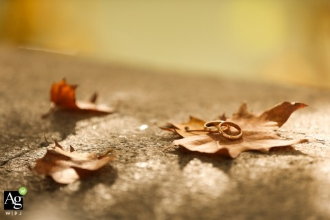 Bari pictures by a creative wedding photographer | detail of rings on a maple leaf