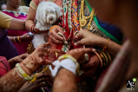 Gujarat wedding photographer | India wedding details and a small, white dog