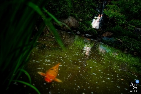 Rockford - Anderson Japanese Gardens Wedding Portraits of a couple and koi fish