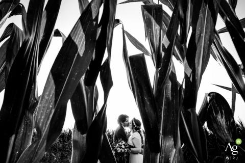 Valence, France Portrait de champ de maïs de la mariée et du marié | Photos du jour du mariage