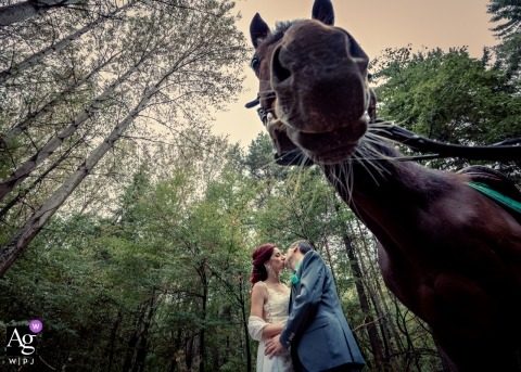 Sofia, Bulgaria	Wedding Day photo session of the bride and groom kissing during a portrait shoot with a horse in the foreground