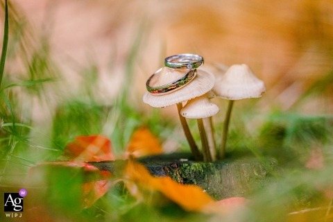 Netherlands wedding detail image In a forest of wedding rings on a mushroom