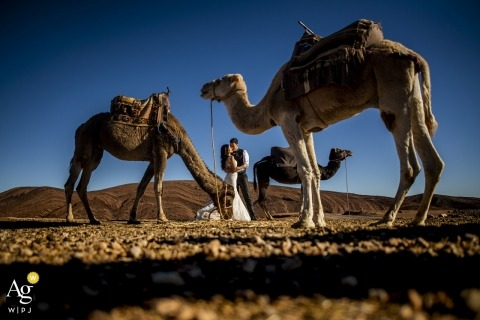 morocco bride / groom portrait in the desert under blue skies with camels