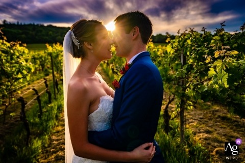 Denbies Wine Estate, Surrey fotografía de boda | Ciérrese encima del retrato de la pareja que se coloca en viñedo en la puesta del sol. Llamarada viniendo entre sus caras.