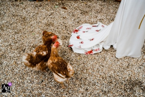 Ashley Wood Farm, Tisbury, Wiltshire, England wedding photographer: Chicken feed...or dress details? ha!