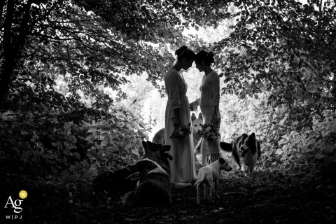 Limoges Haute-Vienne wedding photographer taking portraits in the woods with dogs