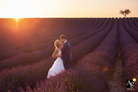 In the Lavenders fields close to the reception during wedding portrait session  | The Golden hour on the lavenders fields