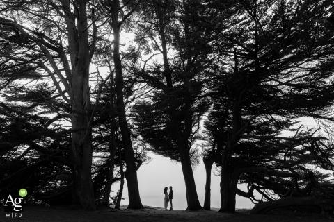 加利福尼亚州门多西诺的Cypress Grove,Brewery Gulch Inn,加利福尼亚州门多西诺的创意婚礼那天剪影肖像,新娘和新郎在树下