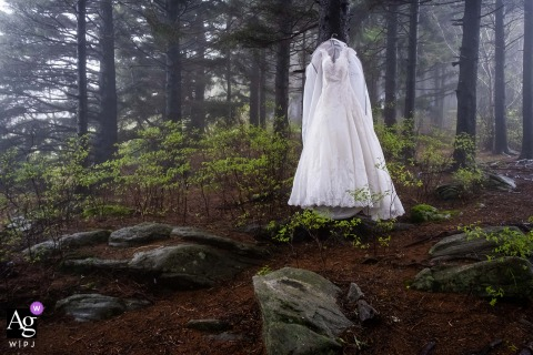 Stand of Trees, Black Balsam Knob, NC wedding image of the Bride's dress hangs on tree