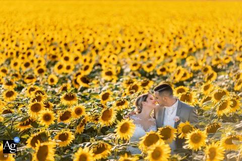 Hochzeitsporträt eines netten Paares in einem Sonnenblumenfeld in der Provence