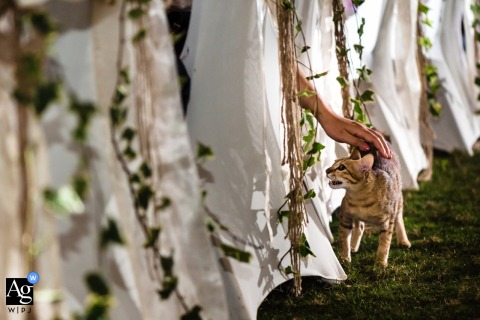 Vietnam wedding detail image of a cat roaming the outdoor reception with a guest reaching down to pet her
