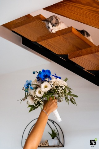 Trieste, Italy fine art wedding detail photography picture with the Cat and bouquet of the bride being held up