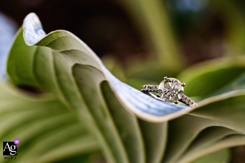 Artistic wedding photo showing Engagement ring on backyard plants in New Jersey