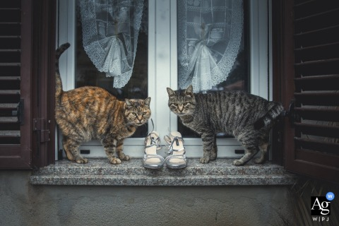 Ancona fine art wedding picture of two cats in the window with the brides shoes