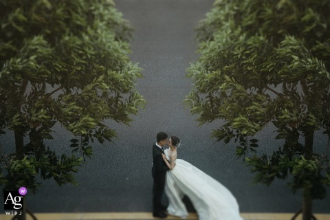 Quanzhou, Fujian creative tree framed wedding portrait