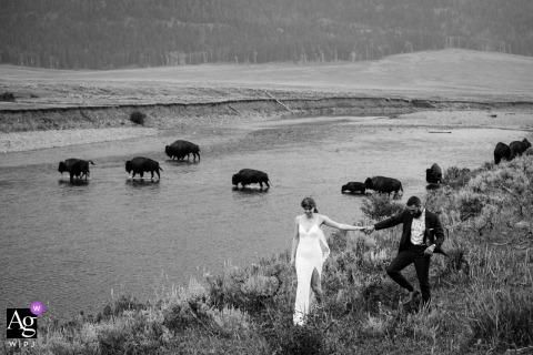 View thispictorial Lamar Valley wedding day pic in BW of the couple with bison, which was a featured pictureamong the best wedding photography in Yellowstone from the WPJA