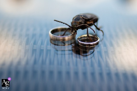 View thispoetic Goliama Zelezna marriage detail photo of The wedding rings with a bug, which was a featured pictureamong the best wedding photography at Raiski Zaliv in Bulgaria from the WPJA