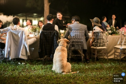 London dog sits behind guests at the outdoor reception on the grass lawn - England wedding reportage photo