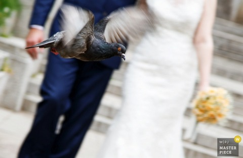 Detail photo of of a pigeon flying in front of the bride and groom by a Sofia, Bulgaria wedding photographer.
