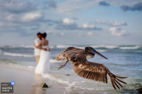 The bride and groom kiss on a beach as a large heron flies in front of them in this photo by a Playa del Carmen wedding photographer.