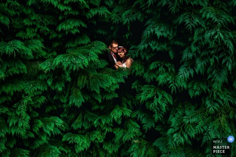 Photo of the bride and groom almost completely engulfed in lush pine trees by a Bristol, England wedding photographer.