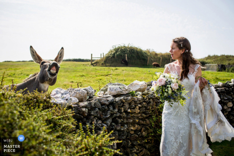 The bride turns to look at the donkey braying behind her in this photo by a Devon, England wedding reportage photographer.