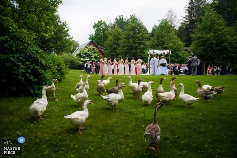 Une volée d'oies regarde la cérémonie du mariage sur cette photo réalisée par un photographe de mariage à Los Angeles.