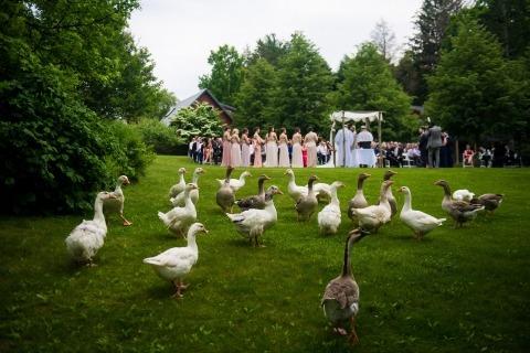 Wedding Photographer Andre Maier of California, United States