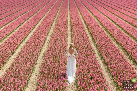 Holland wedding portrait of a bride standing in a field of pink flowers on a sunny day
