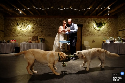 Lot-et-Garonne wedding photographer captured this silly photo of the bride and groom reading a speech while their dogs play tug of war in the foreground