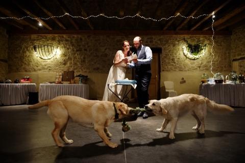 david page reportage fotografie voor bruiloften