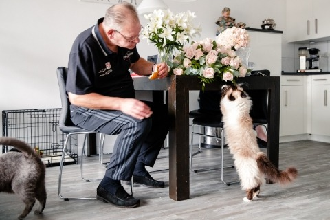 Documentary Wedding Photographer Jacqueline Dersjant of the Netherlands captured this cat with flowers during the getting ready
