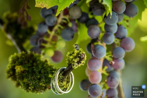 Miami wedding photographer captured this photo of a pair of wedding rings dangling from a grape vine full of purple grapes