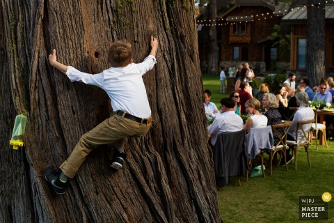 Photo of a young boy trying to climb a large tree during the reception by a Lake Tahoe, CA wedding photographer.