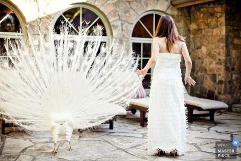 Novia de pie con su vestido junto a un pavo real blanco por el fotógrafo de bodas de Denver