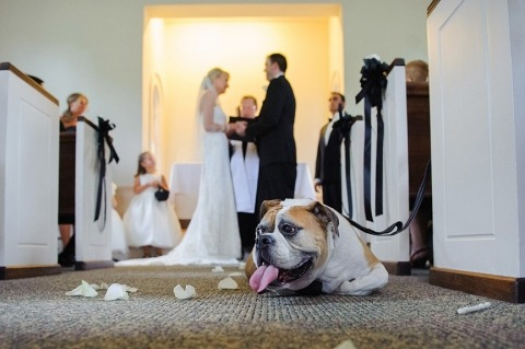 Wedding Photographer Razvan Horeanga of Iowa, United States