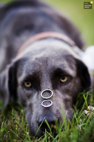 Lower Saxony wedding photographer captured this detail shot of the wedding rings resting on their dogs nose