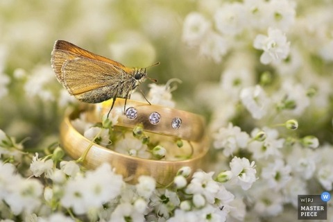 Thuringia wedding photographer captured this detail shot of a moth resting on the couples wedding rings as they sit on a bed of white flowers