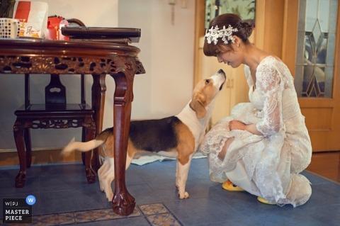 Shanghai Wedding Photographer   Image contains: bride, dog, getting ready, home, pre-ceremony