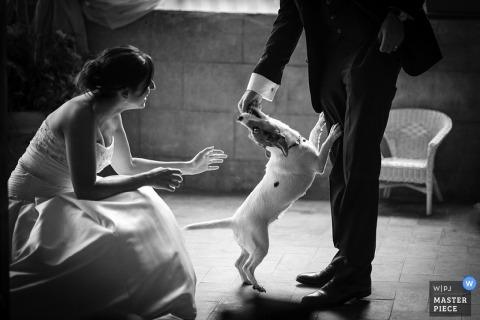 Arezzo Documentary Wedding Photographer   Image contains: bride, groom, black, white, dog, chair