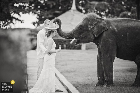 Thailand Wedding Photographer | Image contains: elephant, black, white, bride, groom, outdoors, hat