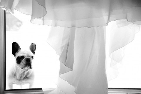 Wedding Photographer Yann Richard of , France