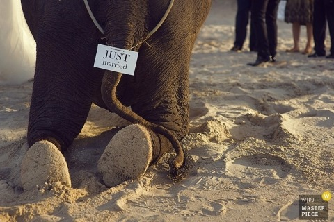 Wedding photograph from Shanghai | Image contains: elephant, sand, beach, outdoors, color, ceremony