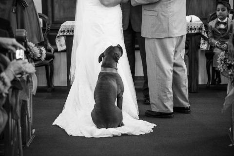 Photographe de mariage Brendan Bullock du Maine, États-Unis