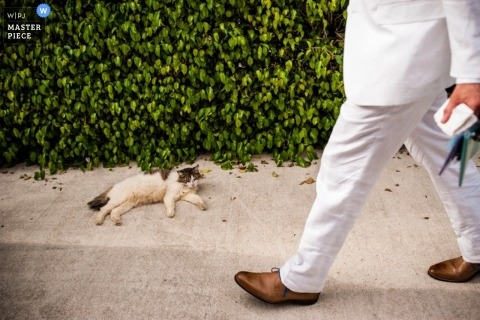 San Francisco Documentary Wedding Photographer | Image contains: white, bushes, cat, sidewalk, color, detail, white tux