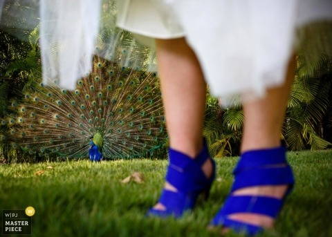 Toronto Wedding Photographer | Image contains: peacock, grass, blue, shoes, dress, palm trees